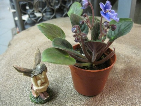 Fairy with an African Violet