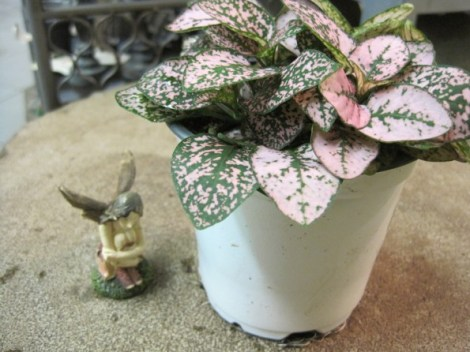 "Fairy with Hypoestes ""Pink Splash"""